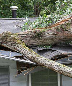 Tree Removal From The House